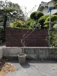 このオリーブの木は鉢が小さいという事ですが 鉢を大きくすると 上だけ葉が生えていくような事はなく、横にも枝が伸びてきて 形のいいオリーブの木になりますか