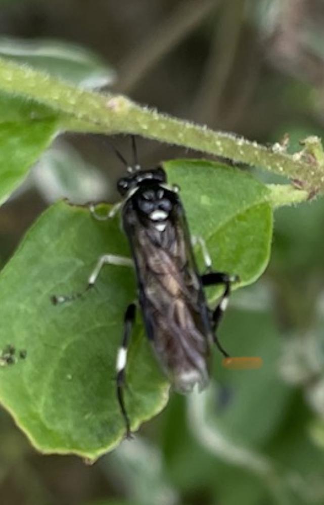虫の名前を知りたいです。 玄関前の木に子を作っているのかそばを通ると、一斉に何匹も飛び立ち刺されそうでが怖いです。1センチから2センチ位。羽音は蜂のようです。是非教えてください。