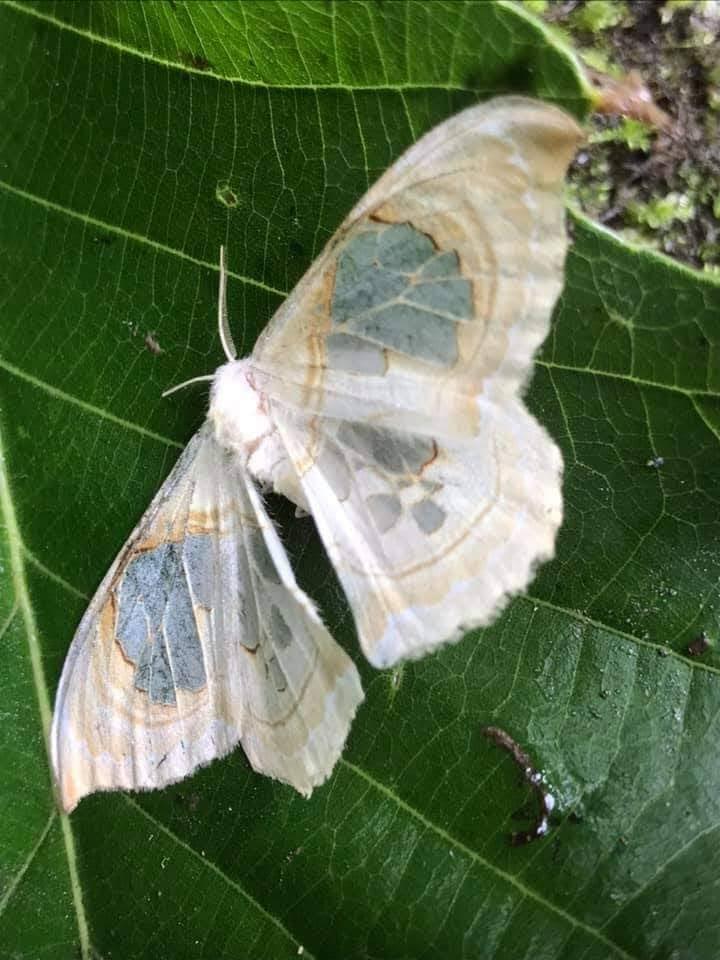 この蛾は何と言う名前ですか?