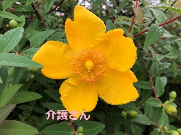 この花の名前は何ですか? 撮影場所は兵庫県で、撮影日時は2021年5月17日です。 よろしくお願いします。