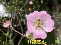 この花の名前は何ですか? 撮影場所は兵庫県で、撮影日は2021年5月19日です。 よろしくお願いします。