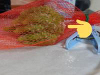 サボテンの胴切りをしました。 その後4日経過しました。  小さなサボテンだと1週間ほどで発根するとありますが、こちら発根と呼べるのでしょうか……?  少しみょこっと先っぽが出てきましたが……  調べてみたところサボテンの発根の様子が一切ないので心配になってきました。  どなたかサボテンを育てられていた(いる)経験をされた方のご意見を頂きたいです…。  お願いします