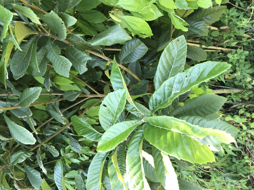 これは何という植物ですか?