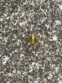 蜘蛛の種類について 画像があるので注意してください  庭のベンチに座っていたら足に1cmほどの黄緑の蜘蛛が乗ってきました。 見た目とか動きはイエグモそっくりです。 これはなんという蜘蛛ですか? 関西住みです。
