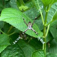 クモの種類と足の先にある白い物は何でしょう