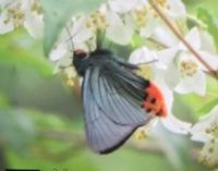 これ、何でいう蛾?蝶?ですか?