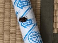 ゴキブリの名前を教えてください。 潰れてるんですがこのゴキブリの種類が知りたいです