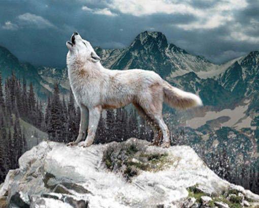 オオカミで体長165cm 体高98cm 体重53kgってかなりデカいですよね? さらにヘラジカを一頭で殺せるし、クマやトラを数頭で殺せる戦闘能力を持つとします。 色は真っ白で、このような風貌。 犬好き、動物好きからしたら萌えますか?
