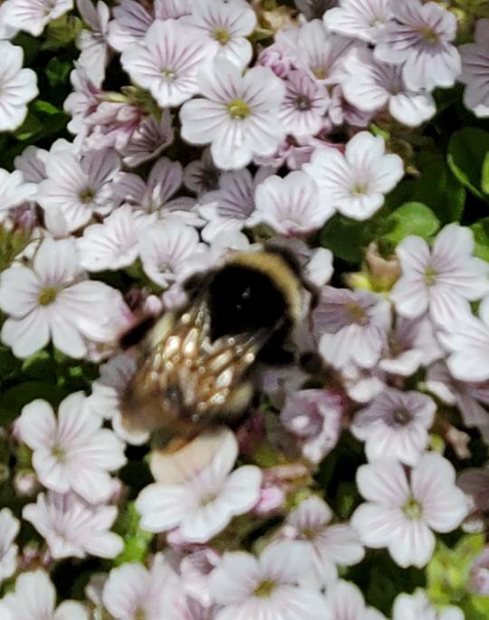 これ なに蜂ですか