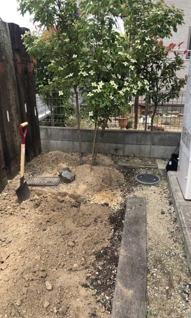 ヤマボウシの植え替えについて教えて頂きたく投稿しました。 以前まで倉庫を置いてたのですが、年々ヤマボウシが大きくなってきて、隣の敷地にまで広がってきたので少し庭木をずらそうと考えています。 ヤマボウシの植え替え時期は今じゃ無いとはおもうんですが、少しずらす程度なら庭木を動かしても大丈夫でしょうか? 花が咲いてくれて、動かしづらいんですが ずっとこのままってわけにもいかなくて。 倉庫を置いてた場所は天地かえしだけはしてます。少し場所をずらすために根っこからこの時期に動かしてしまうと、ヤマボウシにかなり負担がかかってしまうんでしょうか?