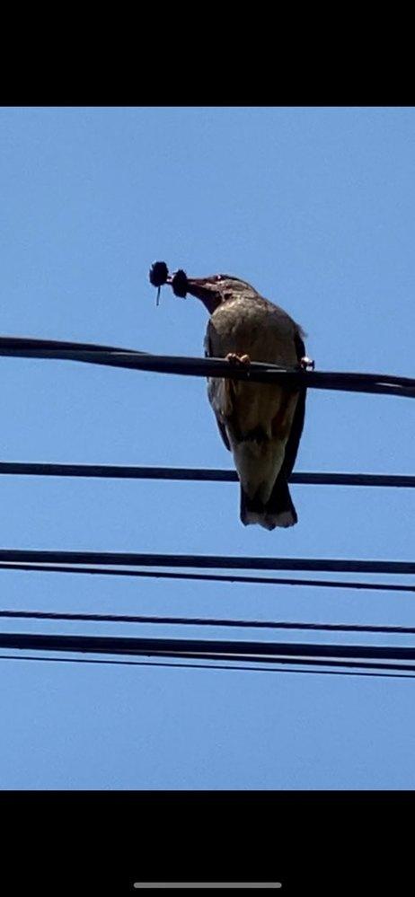 これは何という鳥でしょうか。