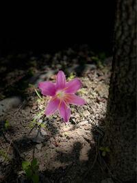 この花の名前わかれば教えてください。 今頃の時期に咲きます。 雑草なのかな? 庭の草むしりをしても、また翌年には咲きます。