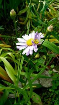 花の名前を教えて下さい、 岐阜県美濃加茂市で、 撮影2021年06月