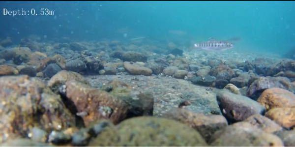 この写真に写っている魚はなんという名前ですか?北海道にいました