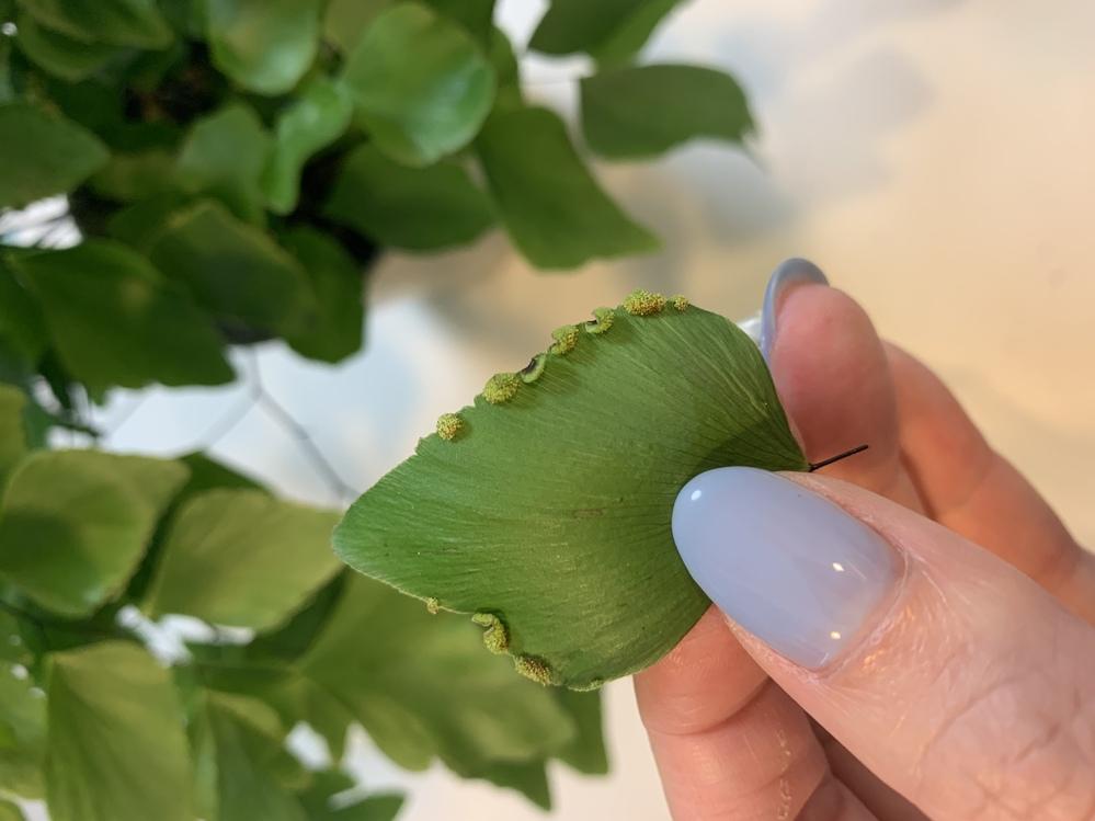 観葉植物の葉の周りのコレは病気ですか?害虫でしょうか? もし病気でしたら対処法も教えて欲しいです。 よろしくお願い申し上げます。