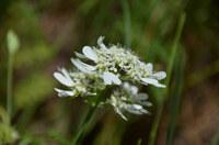 植物です。一昨日撮りました。 真っ白なお花ですが名前が全く解りません。 詳しい方、名前を教えて下さい。 宜しくお願いいたします。