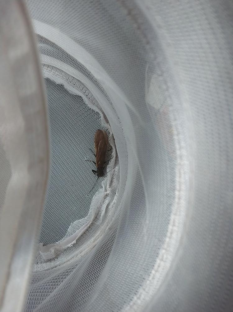 昨日子供がこの虫をとってきました! 何の虫かわかりますか? 知ってるかた教えてください!