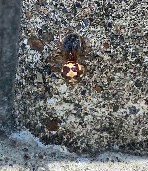 【閲覧注意】このクモの名前は?
