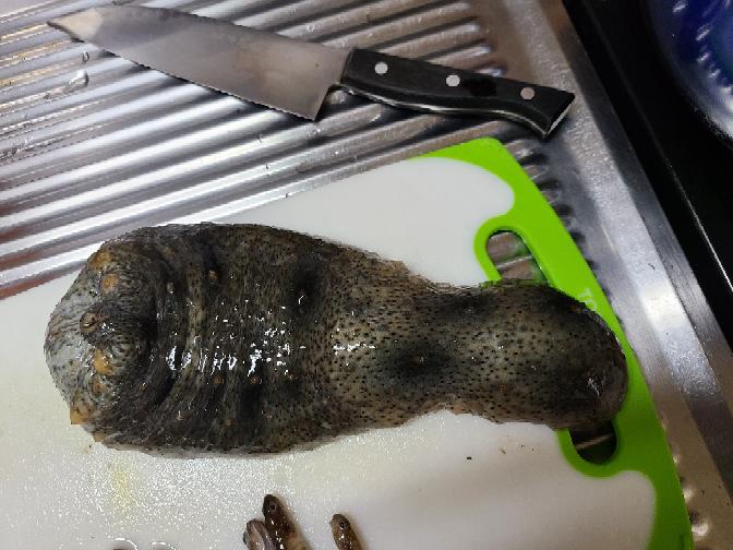 今日釣りしてたらナマコが釣れたのですがこのナマコは食べれますか?