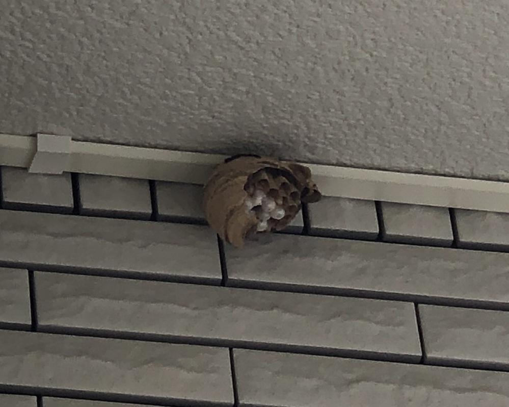 【急募】これってスズメバチの巣ですか?教えてください。よろしくお願いします。