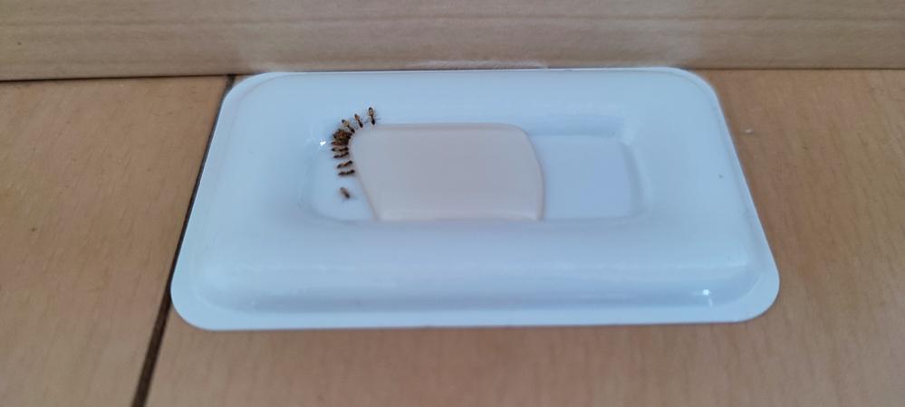 このアリの名前わかりますか? 引越し先(鹿児島)にアリがいましたので アリメツを買いましたが効果があるかは まだ置いたばかりなのでわかりません アリのお尻には横縞の白、茶の模様があります。