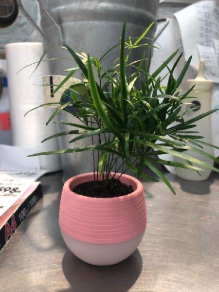 観葉植物の名前教えてください
