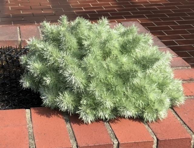 こちらの植物の名前わかりますか…?