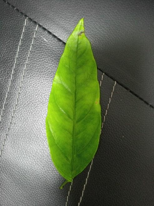 【植物・画像あり】この植物は何ですか?