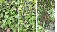 写真の植物の名前がわかる方、教えてください。