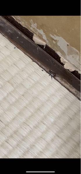 少し見にくいですが、この虫なんですか? 急にふすまの中からカサカサ音が聞こえて出てきました、、 虫が大の苦手なので明るいときに見る虫より 夜に見る虫はほんとに大嫌いです、 虫の種類が分かれば対処できると思うので 詳しい方教えてください!