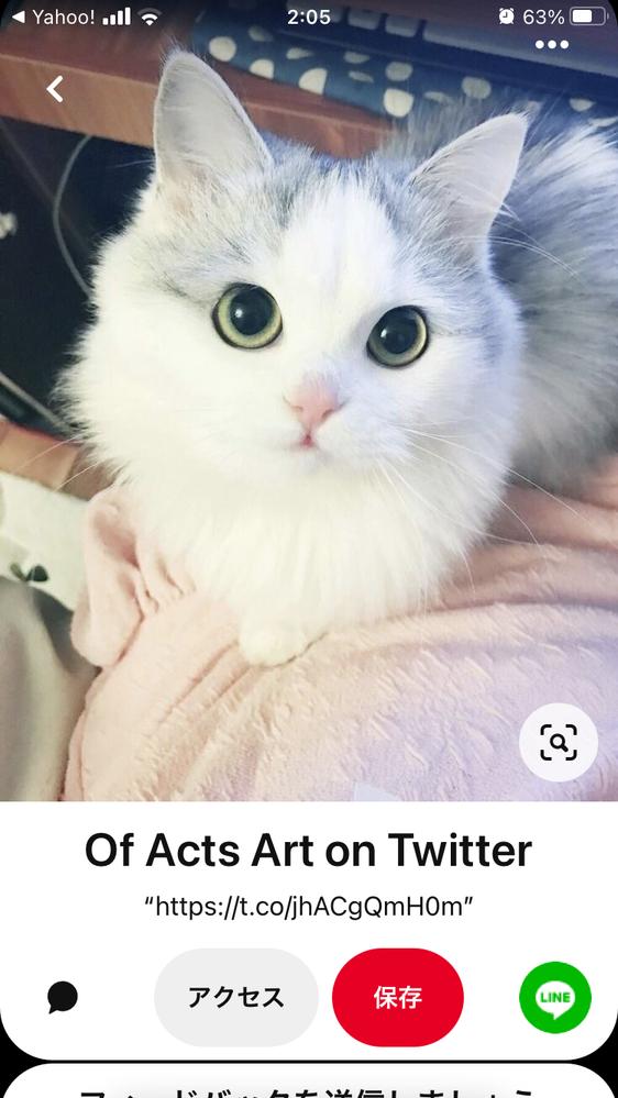 この猫の種類を教えてください。ラグドールでしょうか。 ラグドールはブルーの瞳が一般的ですが、この写真の猫はイエロー またはゴールドっぽい瞳です。 ラグドールで検索してもブルーの瞳しか出て来ないので(ラグドールのオッドアイは片方だけイエロー です) お願い致します。