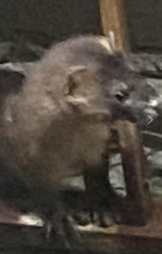 これはネズミでしょうか? ベランダで遊んでます