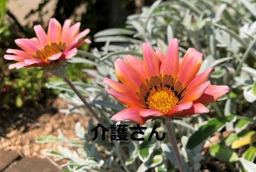 この花の名前は何ですか? 撮影日は2021年5月28日で撮影場所は兵庫県です。 よろしくお願いします。