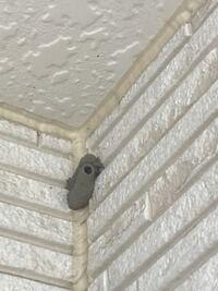 今朝、ベランダの隅にこんなものがついているのに気が付きました。何かの巣?でしょうか。取ろうとは思うのですが、何の生き物か知りたくて。。ご存知の方がいましたら教えて下さい。