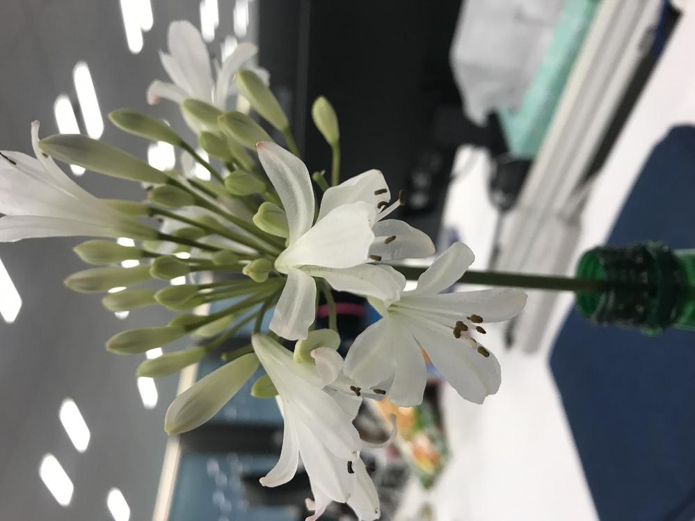初心者で恐れ入ります。このお花の名前はなんでしょうか…? 日比谷花壇さんで購入したのですが、お名前を失念してしまい… 店舗へ電話したのですが、なかなか繋がず… お店の方には、季節のお花として紹介いただきました。 お手数おかけしますが、どなた分かる方おりましたらご教示いただけますと幸いです。