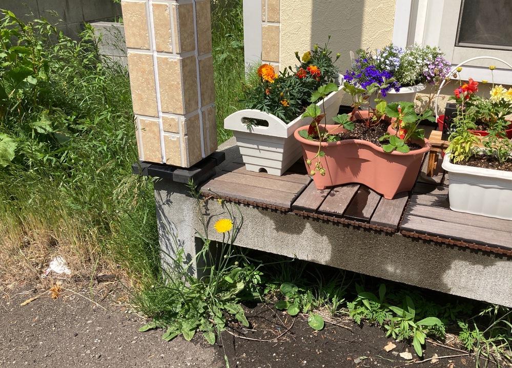 花壇周辺への除草剤散布について。 自宅テラスでプランターや植木鉢でガーデニングを始めました。 ただ、テラスの下側(床下にあたる場所)や周辺に雑草が生えており、かつその雑草が背が高くてテラスの草花に当たりそうです。 オーナーさんに許可はもらったのでとりあえず抜こうとは思うのですが、今後抑制するためにホームセンターで売ってるような除草剤を撒こうかと考えています。(除草剤散布もオーナーOK済み) ただ気になるのは除草剤の成分が揮発してテラス上の花に影響を与えるとか、風や虫によって成分が花壇に持ち込まれないか気になっています。 具体的な環境は写真の通りです。テラスの下側や、左側の雑草部分に撒こうかと考えています。 除草剤を使っても問題ないでしょうか?また、固形と液体とかおすすめはありますでしょうか?