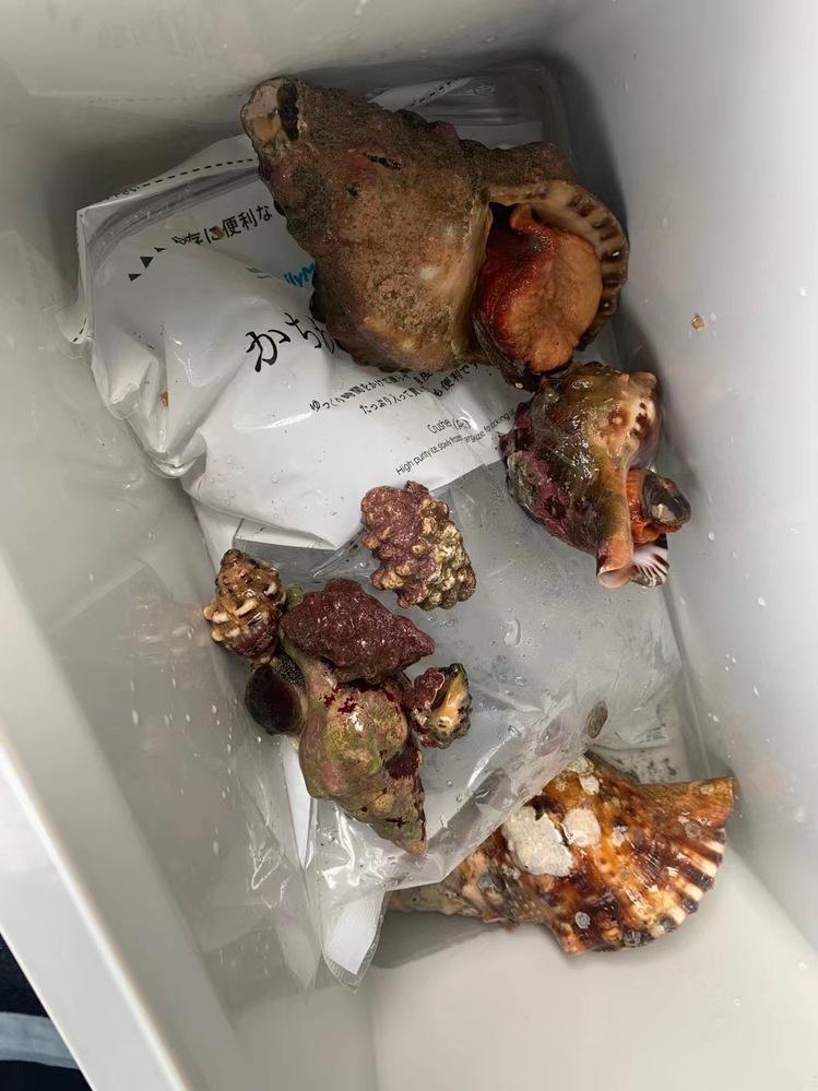 この貝の名前は?食べれますか