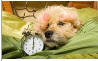 この画像を見て一言お願いします!!! この犬が思ってる事や、考えてそうな事とかです!!