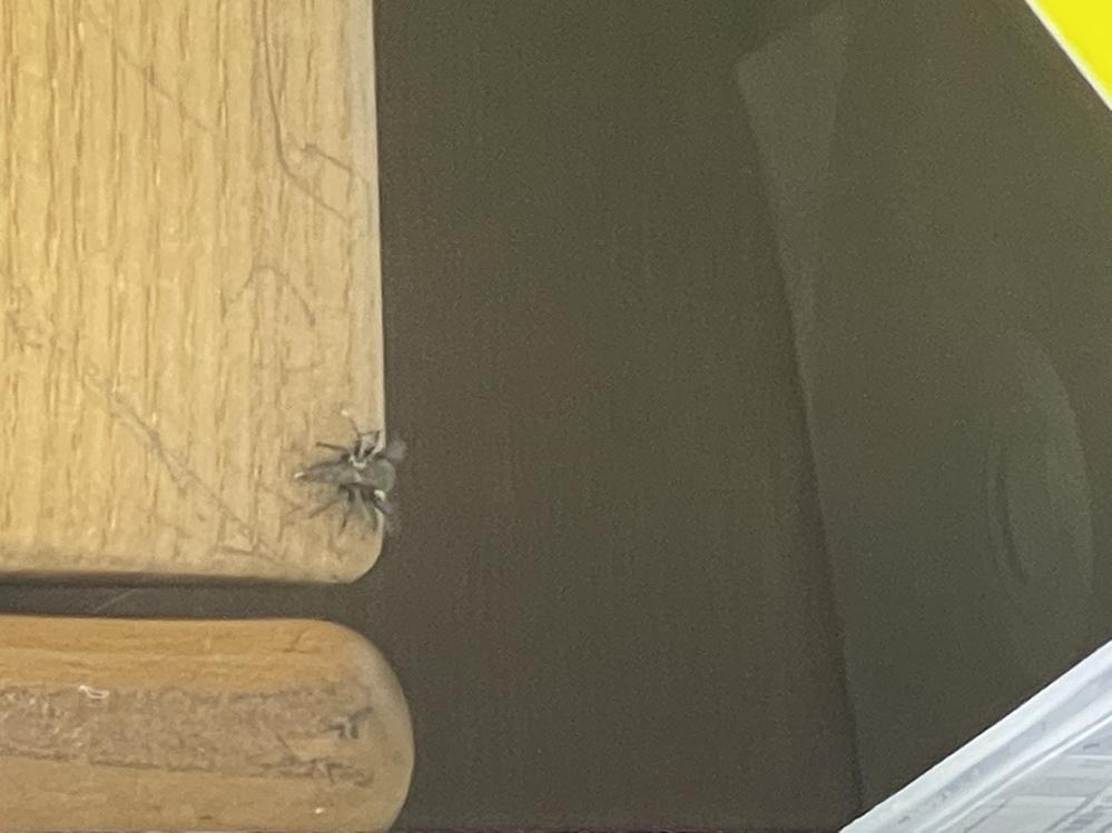 この虫なんですか家に急に出ました