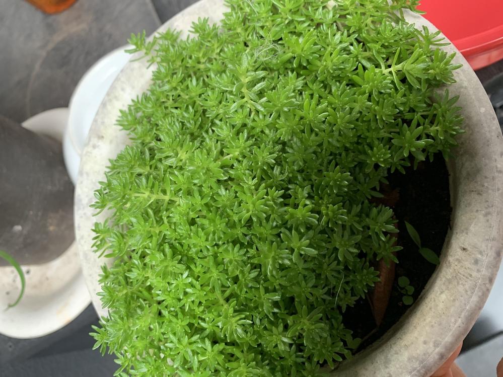 このミドリは、なんという植物ですか? 教えてください!!