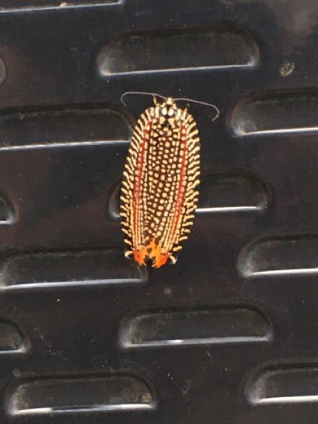 この虫の名前を教えて下さい