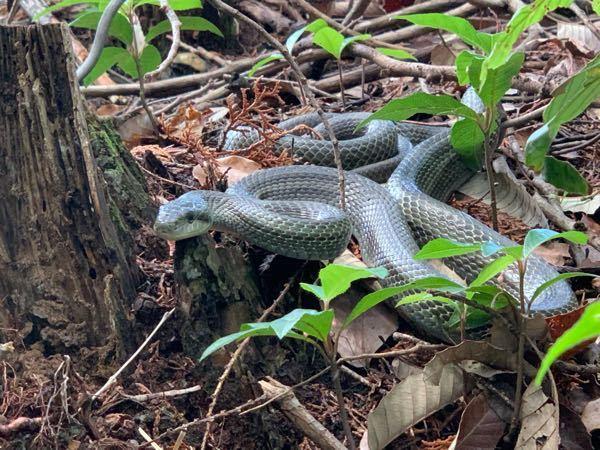 これ何ヘビですか? 近所にいました