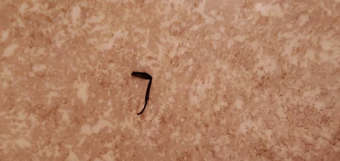 家のトイレにポツンと落ちていたんですがこれはゴキブリの足ですか?恐怖です