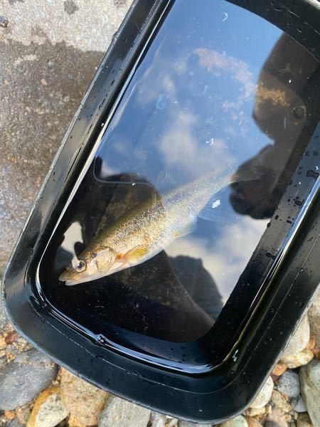 この魚はなんでしょう?