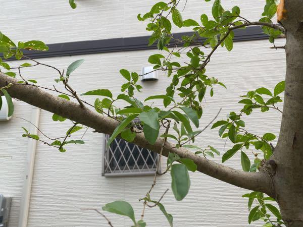 こんにちは。 これ何の木ですか? どなたかよろしくお願いします。