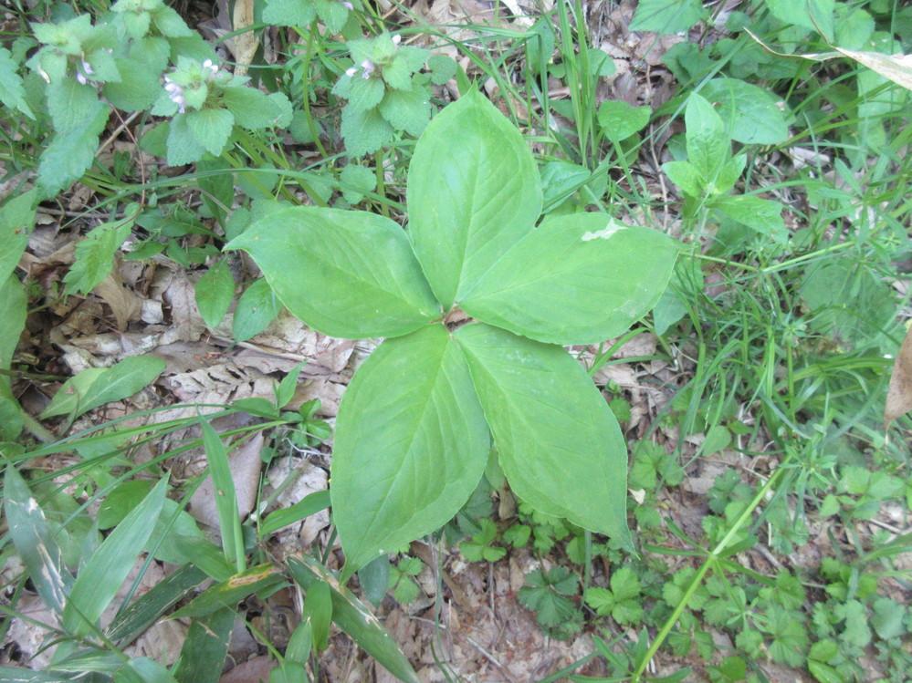 いつも回答ありがとうございます。低い山で見た植物の名前を教えて下さい。5/12