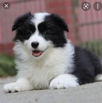 画像の犬の犬種分かる方いますか?  拾った画像ですが… 犬には詳しくないので、分かる方いましたら教えて頂きたいです! よろしくお願いします。