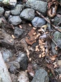 草刈りしてて石を寄せたら小さいアリと白い何かがうじゃうじゃいました。 この白いのはアリの卵ですか?