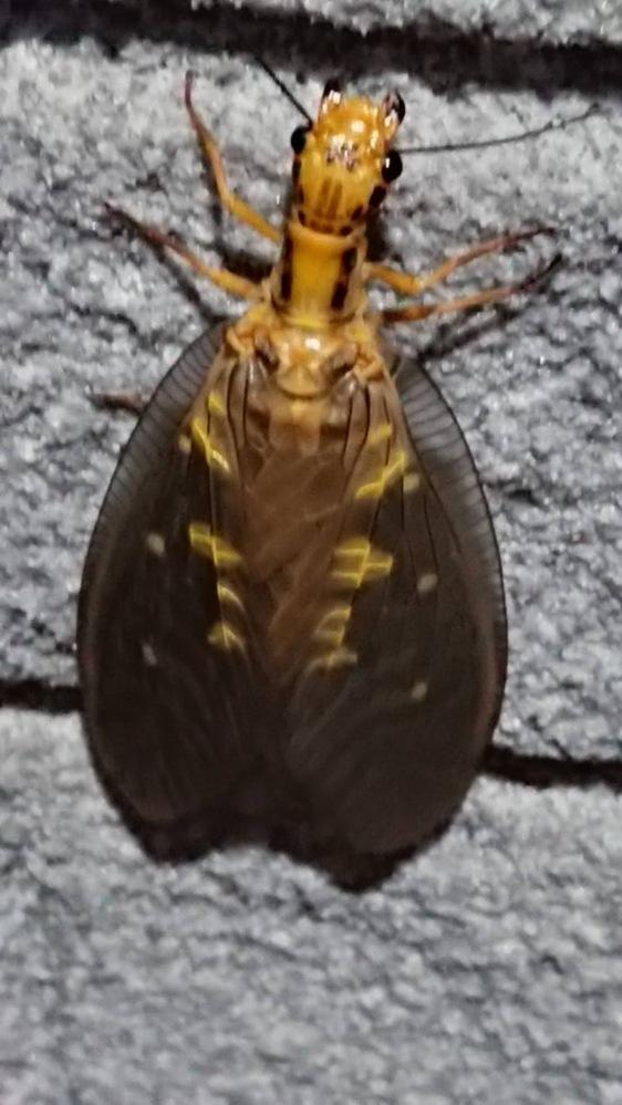 こちらの虫の名前教えて下さい。