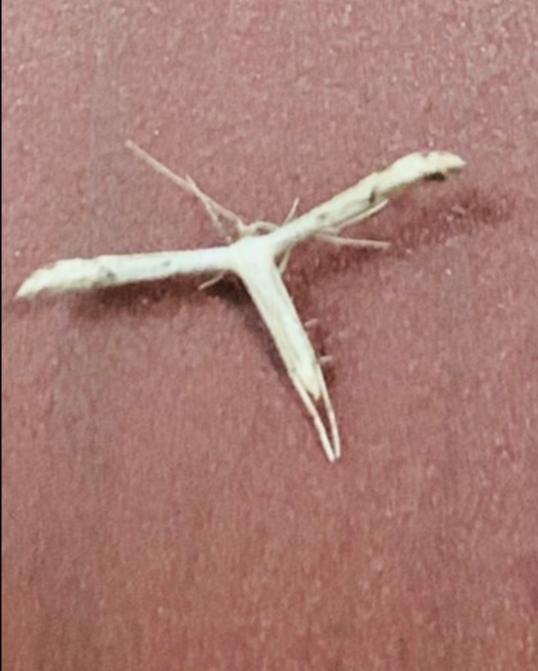 この虫の名前は?画像あり